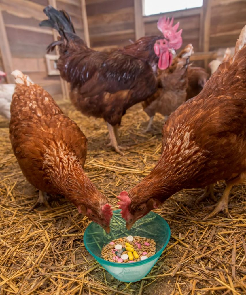 HOW TO REDUCE ANTIBIOTICS USE IN POULTRY? 8 Tips