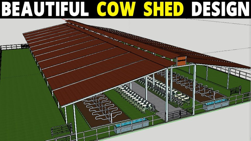 Dairy Cattle house construction