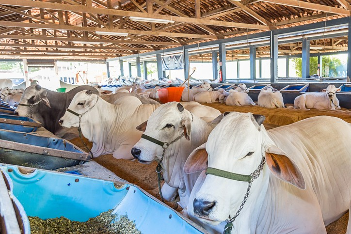3 Factors to consider to run a thriving feedlot agri-business